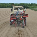 Planting Chardonnay - Hush Heath 13th May 2011